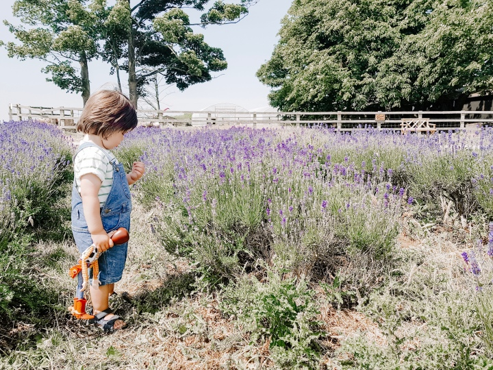 Day Tripping || Lavender Summer Daze