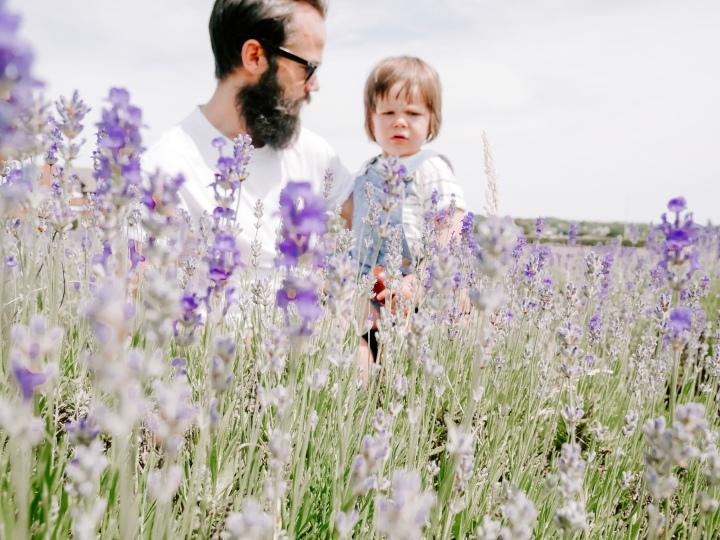 Inglenook Farm Lavender Field